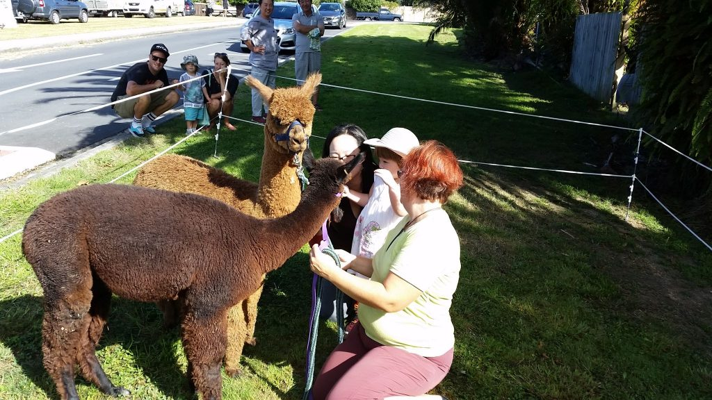 With the Alpacas at the Waimauku Gala
