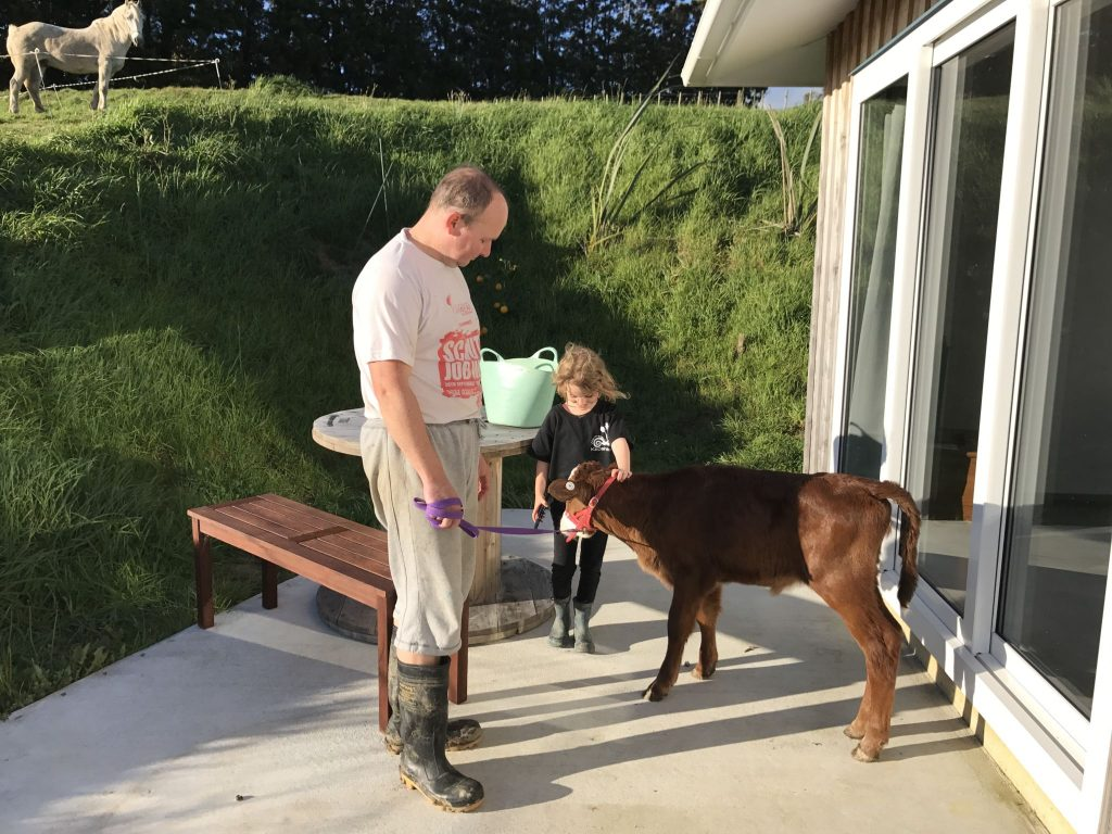 Practicing taking your calf out for AG Day