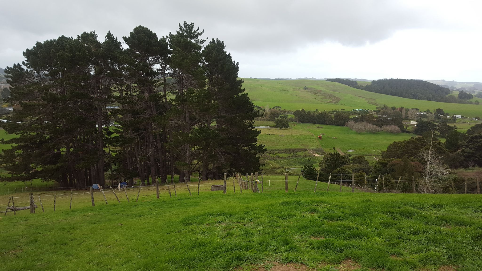 A view of the paddocks