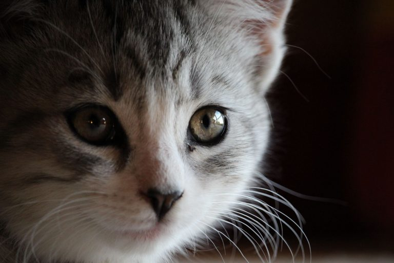 Sillver, our cat