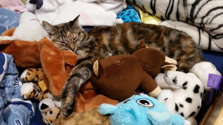 Cheetah hiding in Jolans bed amongst the cuddly toys