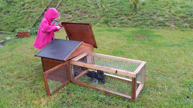 Moving the ducks into the outside ex-chook-now-duck house