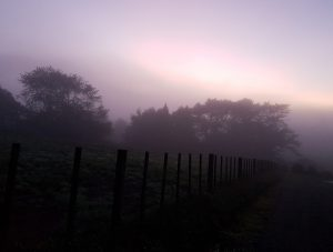 Fog in the paddocks at sunrise