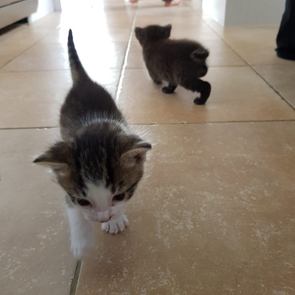 Kittens on the kitchen floor