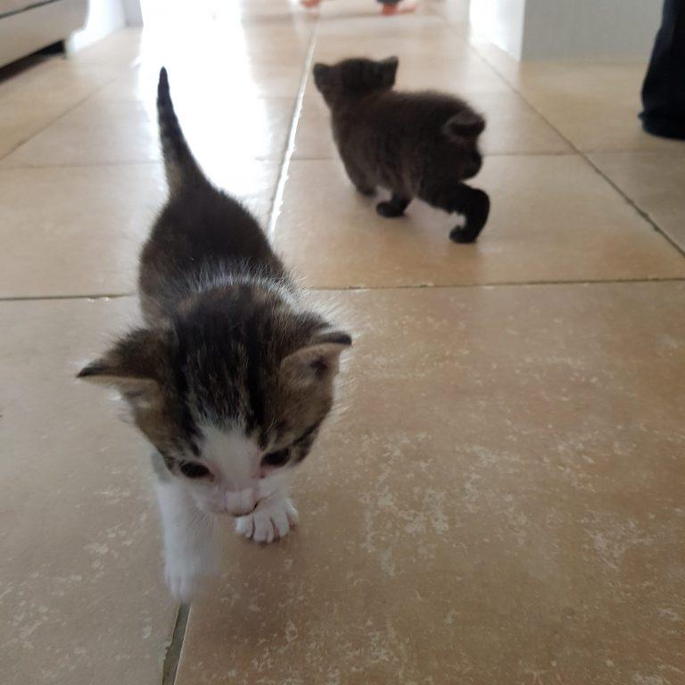 Kittens on the kitchen floor