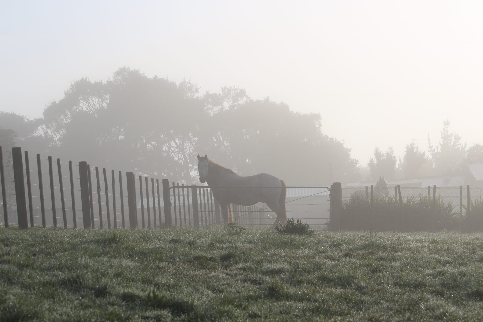 Horse at gate in the fog