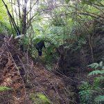 Woman pushing her way through bush