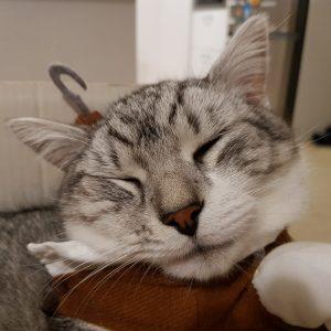 Closeup photo of a white-grey cat face