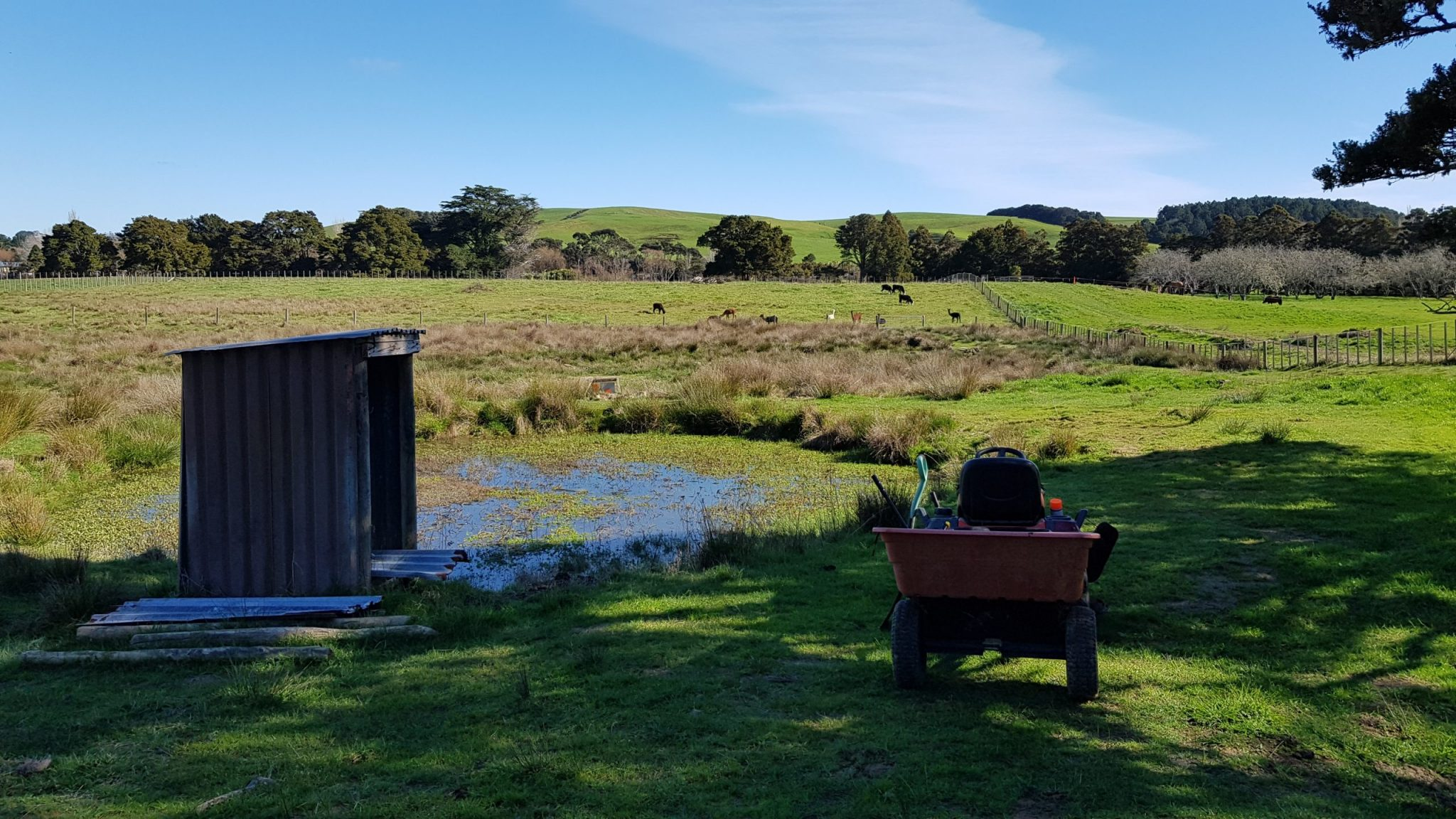 Ride-on mower parked in front of a green growth covered pond in front of paddocks and alpacas in the distance