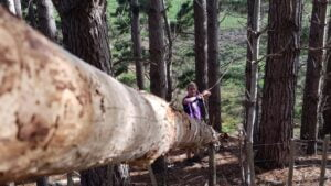 Image along a log with a pulley attached to it at the far end in the slightly blurry distance.