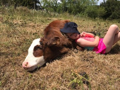 Jolan laying on her calf